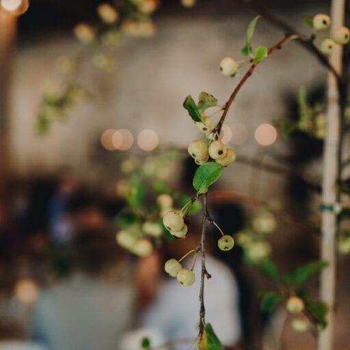 Træer til bryllupspynt