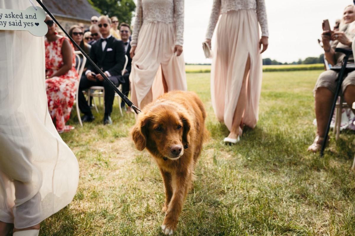 Brudehund