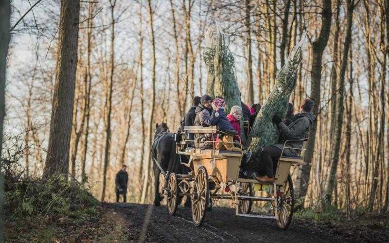 Familie på karet med juletræer trukket af hest til julearrangement