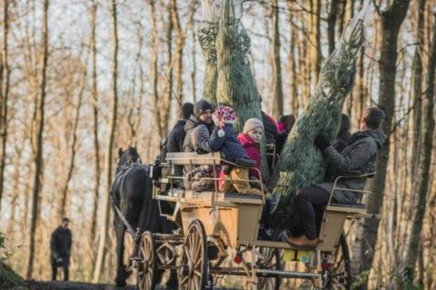 Familier henter juletræer i skoven til julearrangement