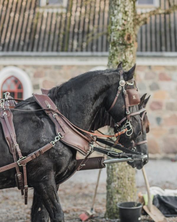 heste står klar til at trække karet ud til juletræsplantagen til julearrangement